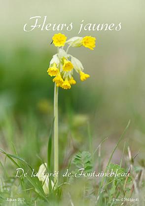 eBook Fleurs jaunes sauvages - Djamal Makhloufi