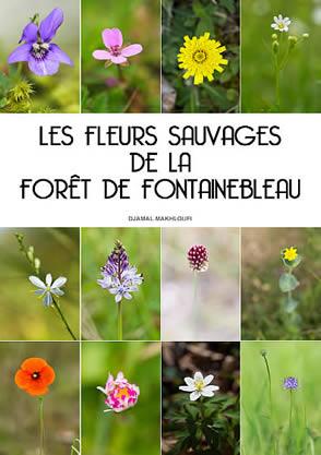 eBook Fleurs sauvages de la forêt de Fontainebleau - Djamal Makhloufi