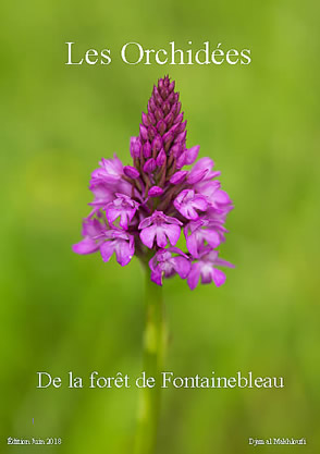 eBook Orchidées sauvages - Djamal Makhloufi