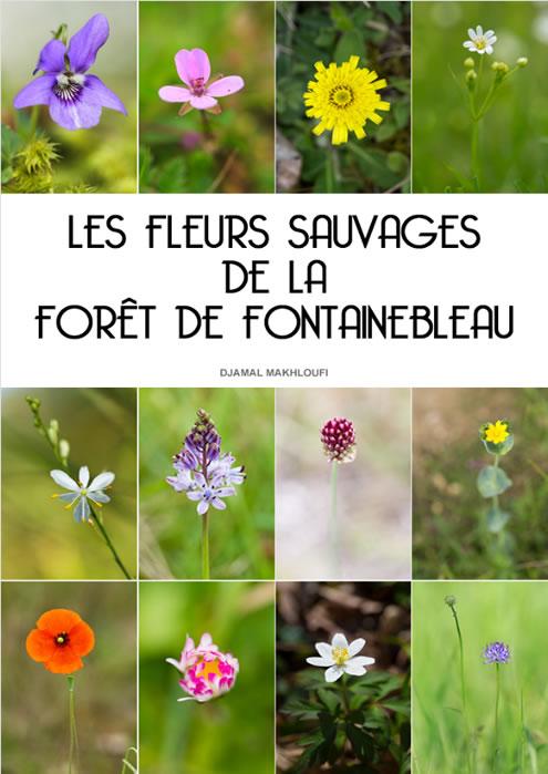 Fleurs sauvages de la forêt de Fontainebleau - eBook