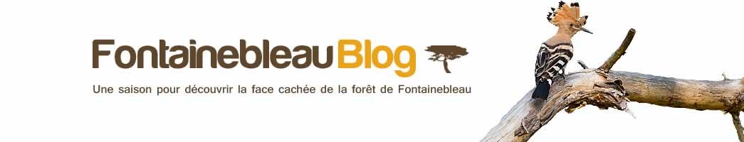 Fontainebleau Blog