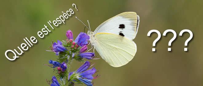 Quel est ce papillon blanc et noir ?