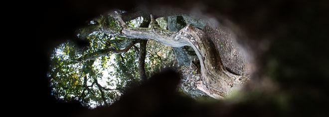 Faire des photos de paysages en forêt de Fontainebleau