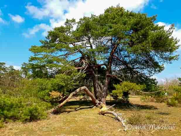 Coin pour le pique-nique - Cabaret Masson forêt de Fontainebleau