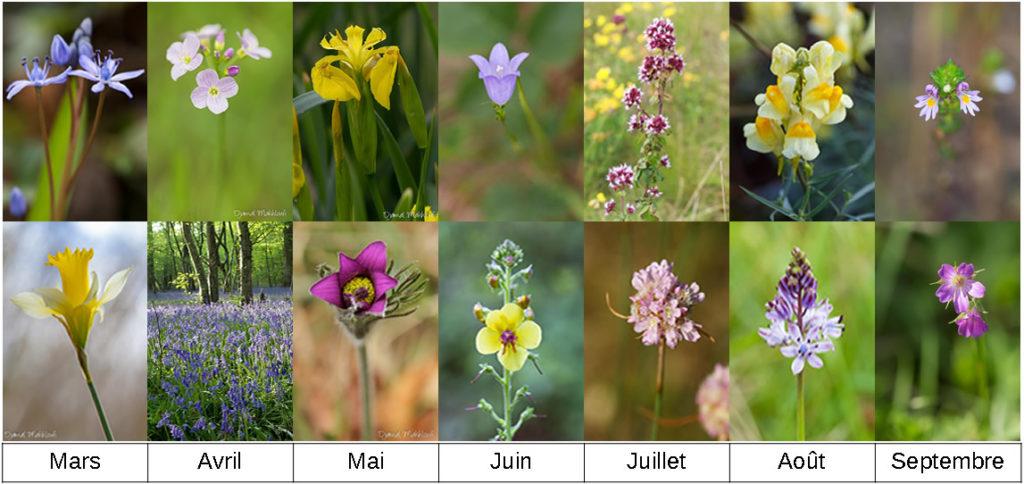 Agenda flore sauvage printemps été