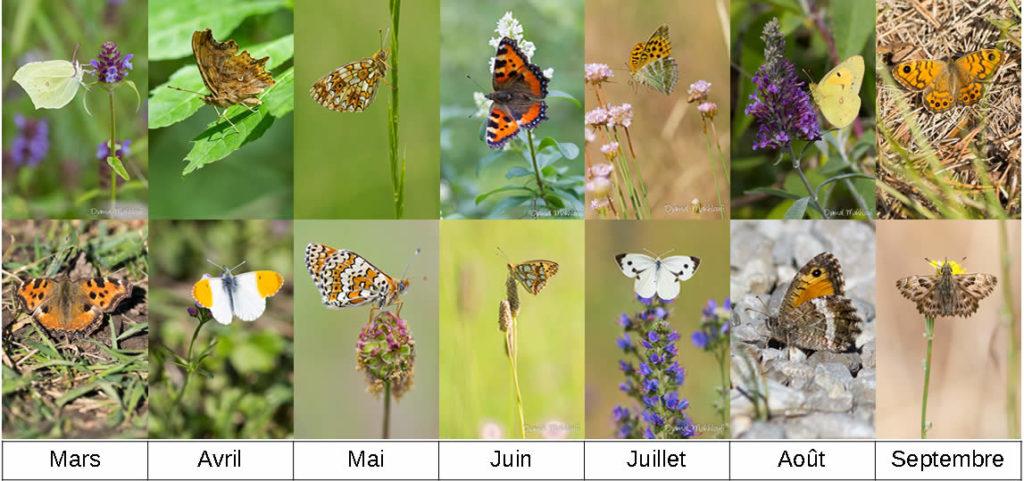 Agenda des papillons de jour de la forêt de Fontainebleau