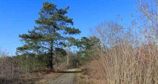 Chemin pavé de Coquibus - Massif des 3 Pignons
